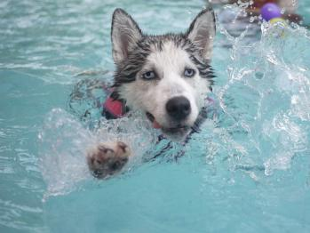 It's time for a Doggie Dip on Sunday!