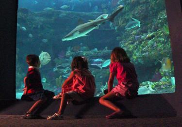 Shark tank viewing at the NC Aquarium at Fort Fisher