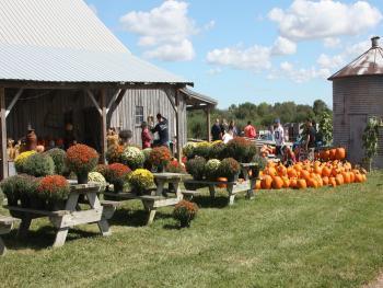 Heartland Apple Festival, Beasley's Orchard, Farm, Fall, Danville