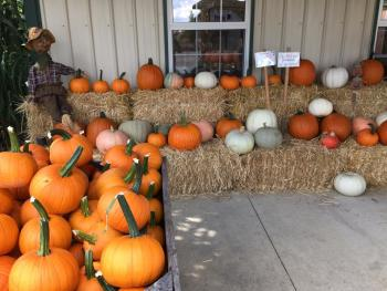 Jacquemin Farms Pumpkins