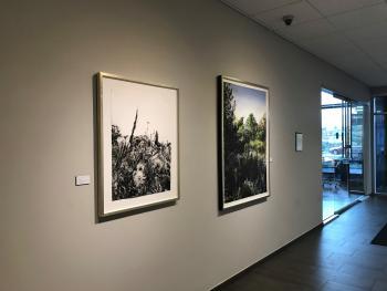 Bridge Park Gallery with Rod Bouc Art
