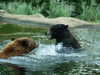 zooamerica-bears-hershey-pa-family-budget-friendly-attractions