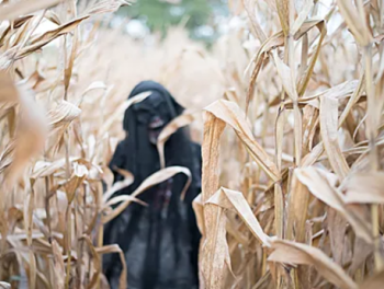 scary figure in corn field