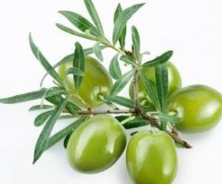 Ormond Beach Olive Oil Co.