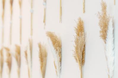 Wheat Wall Behind Bar