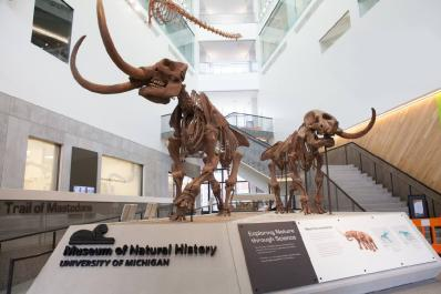 U-M Museum of Natural History