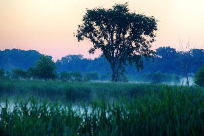 Eagle Marsh Dawn
