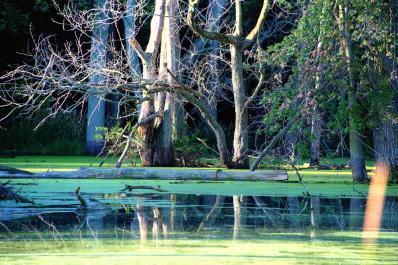 Eagle Marsh Water