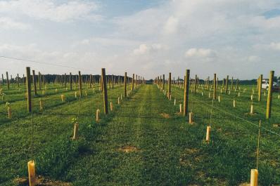 Hartland Winery Web Photos
