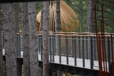 Canopy Walk Detail 1