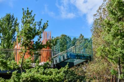 Canopy Walk Glass Overlook 4