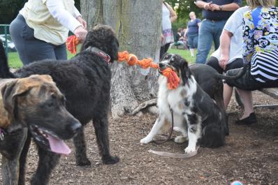 Dog Park 7