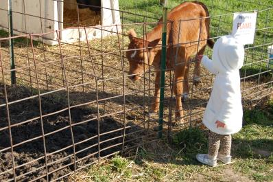 Farm Animal Petting Zoo