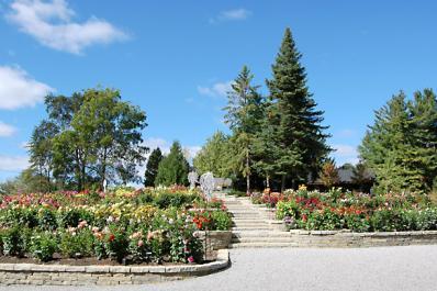 Dahlia Hill Garden
