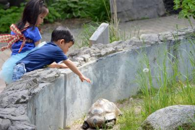 Get close to nature with our tortoise exhibit!