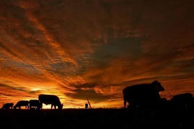 Sunset grazing