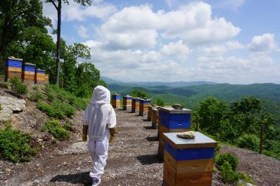 Bee yard on the mountain top