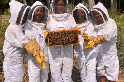 Holding frame of bees