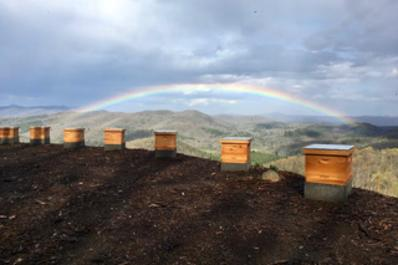 Rainbow over the honey