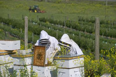 Honey bees at Monte Creek Ranch