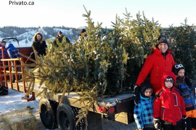 Mom and three kids pick out a giant tree!