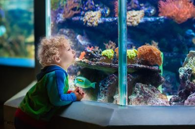 Electric City Aquarium and Reptile Den