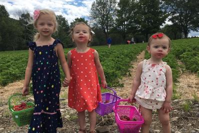 Pallman Farms strawberries