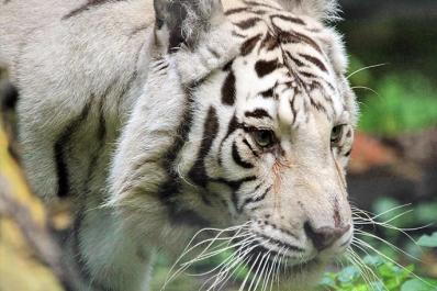 Claws 'N' Paws Animal Park
