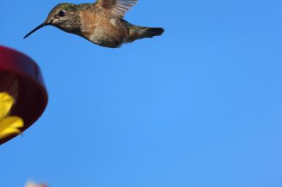 Hummingbird visit at the ranch