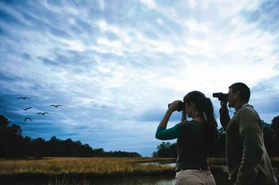 Birdwatching in Coastal Mississippi