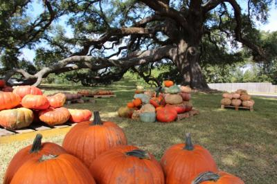Coastal Mississippi Pumpkin Patch