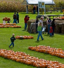 Photo of people enjoying the fall time at the Pick n' Patch in Stanley