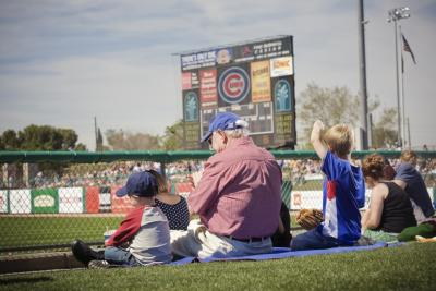 spring training cubs