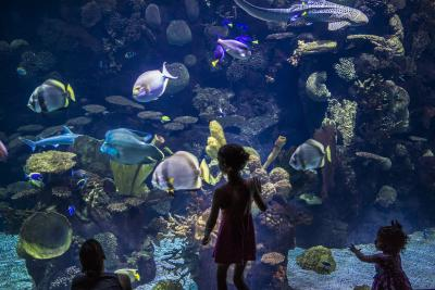 Children standing in front of aquarium full of colorful tropical fish at the Columbus Zoo and Aquarium