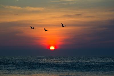 Frisco Pelicans During Sunrise in Outer Banks