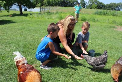 The Farm Chicken Feeding