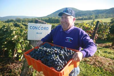 A farmer poses holding a bin of blueberries while smiling to the camera