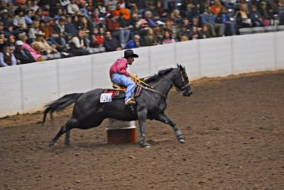 quarter horse congress 4