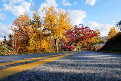 Trees changing colors during the fall times in the Finger Lakes