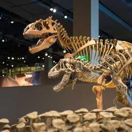 Utah dinosaurs