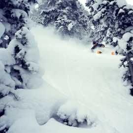 Tree skiing? Yup, Alta has that.