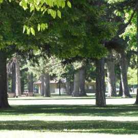 Liberty Park Trees