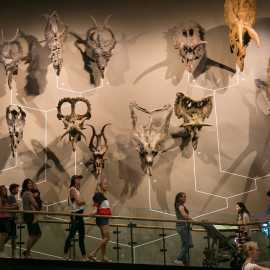 Natural History Museum of Utah_1