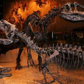 Natural History Museum of Utah_0