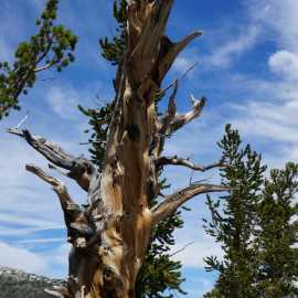 Great Basin National Park_0