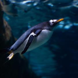 World Penguin Week