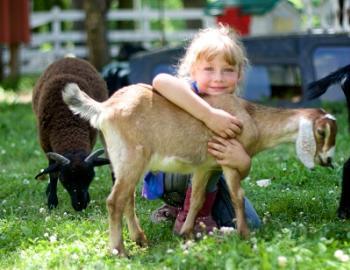 Natural Valley Ranch petting zoo