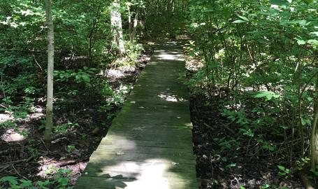 Ambler Flatwoods Nature Preserve boardwalk