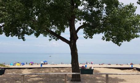 Wells-street-beach-tree