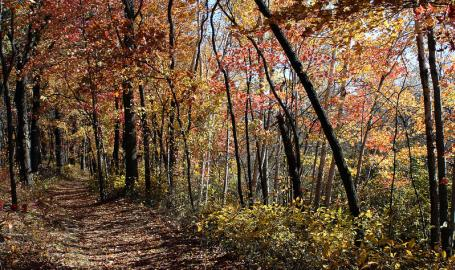 Cowles Bog Trail at Indiana Dunes National Park